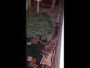 Кот повторяет за крольчихой Морковкой