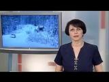 Без дорог, без света, без хлеба - так выживают жители Карелии, которую СССР спас в 1939 г. от