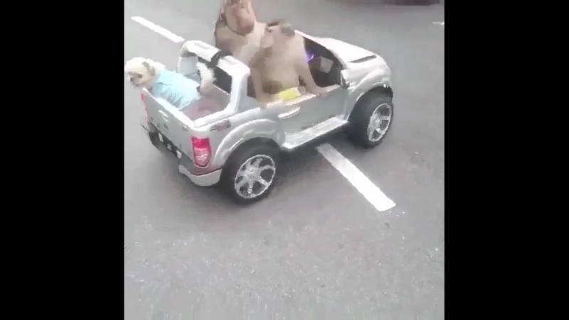 Автоледи с собачкой