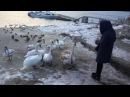 Лебеді Могилів Подільський