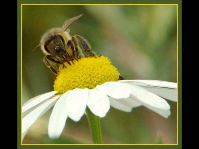 Schubert, The Bee (Včelka) - Ondřej Kvita - violin