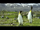 The exhilarating Antarctica, Falkland and South Georgia