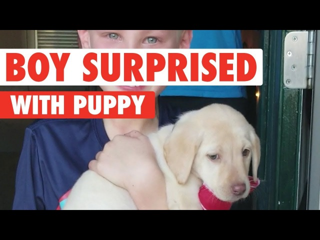Parents Surprise Kids With a Puppy!