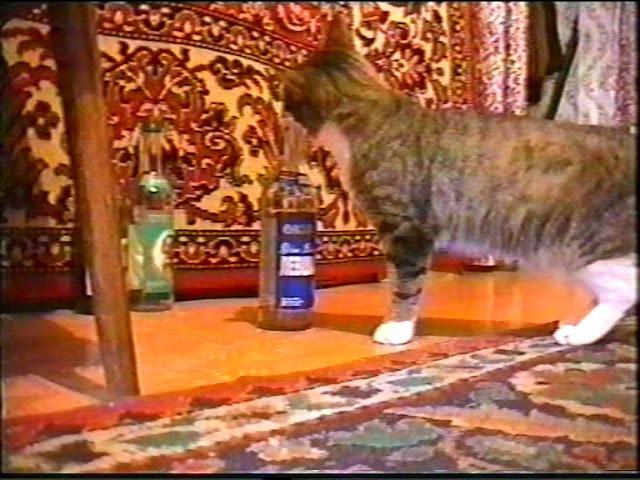 Мой кот Васка! 3 22 04 1998г Сьемка Тарунтаев В Н