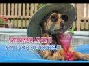 3 motivos por los que tu perro toma el sol Descúbrelos
