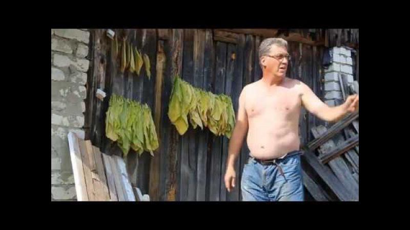 «Табак на огороде: 1 ломка – Вирджиния, Спектр, Гавана 16 июля» 9 серия 2 сезон «Сады порока»