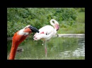 Animal Planet Pink Flamingo Amazing Fishing Skill