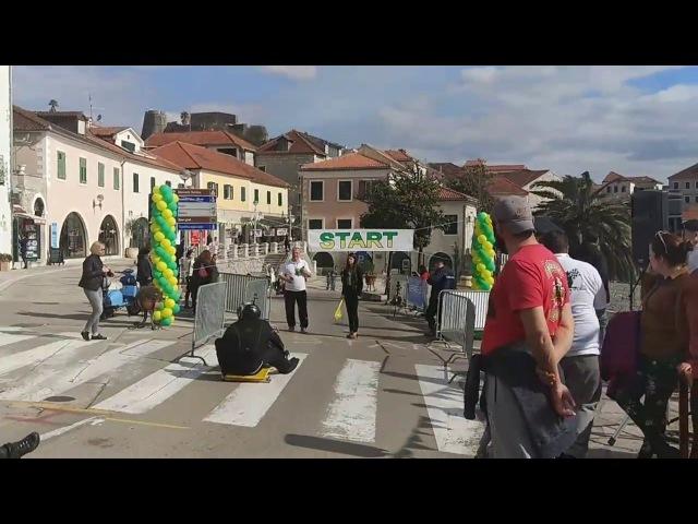 😆Гонки на тележках в Герцег-Нови 😆 (Черногория 2018)