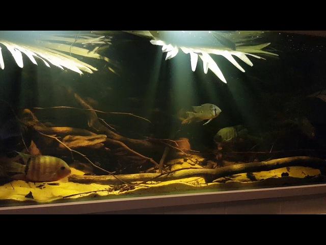 Rio Inirida B1 Biotope Aquarium