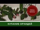 Мою Листья Орхидеи В Ванной Под Душем
