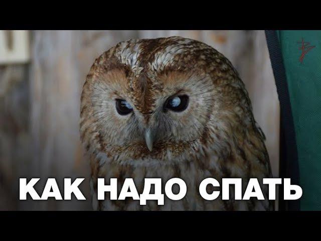 Как правильно спать. Сколько нужно спать человеку. Когда лучшее время для сна. Ви...