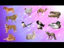Learn Wild Animals With Baby Dance Wrong Big Cat Family Fun Learn Wild Animals Video For Children