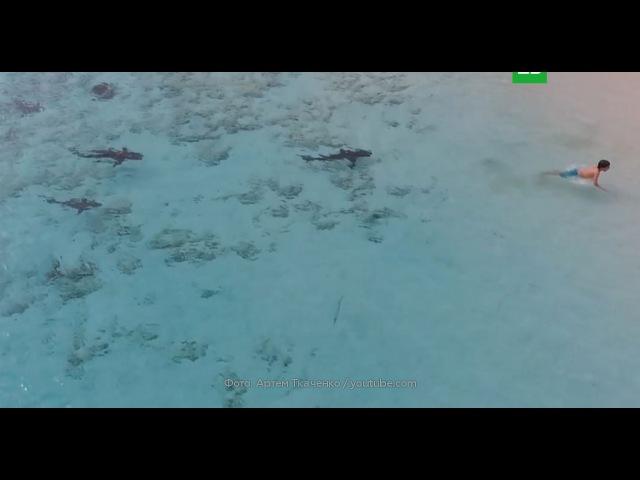 Владелец дрона спас ребенка от нападения акул на Багамах: видео