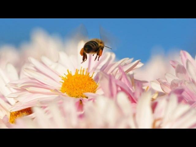 Красивые Цветы релакс музыка 1 релаксмузыка красиваямузыка приятнаямузыка