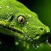 snakeproject.ru