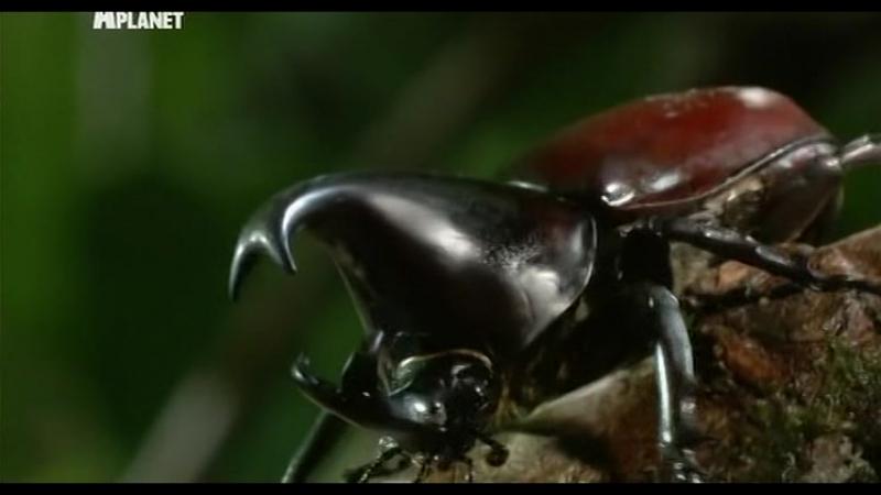 Войны жуков-гигантов / Monster bug wars 05