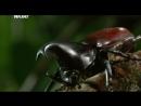 Войны жуков гигантов Monster bug wars 05