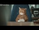 По тачкам кот не обормот
