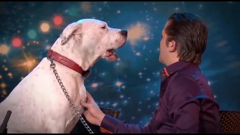 Dog sings Whitney Houston _ Belgiums Got Talent _ VTM