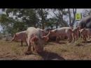 Viasat Nature | Животные, которые изменили историю : Еда [1/6]