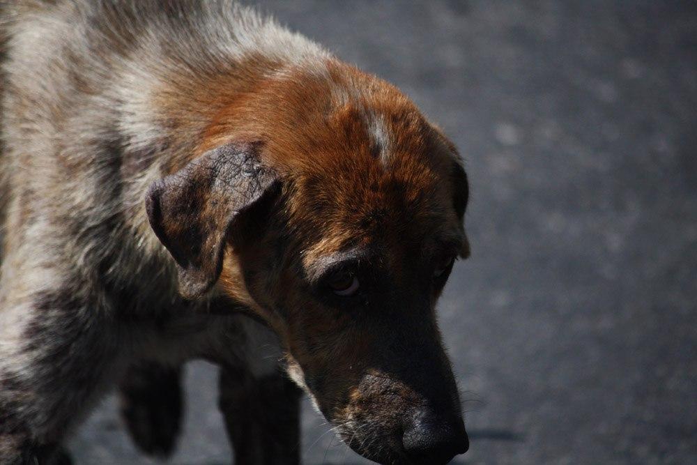 Собачий бум в Армянске пугает не только детей, но и взрослых