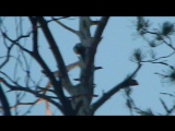 Фото охота на дятла