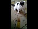 бешеный кот часть2