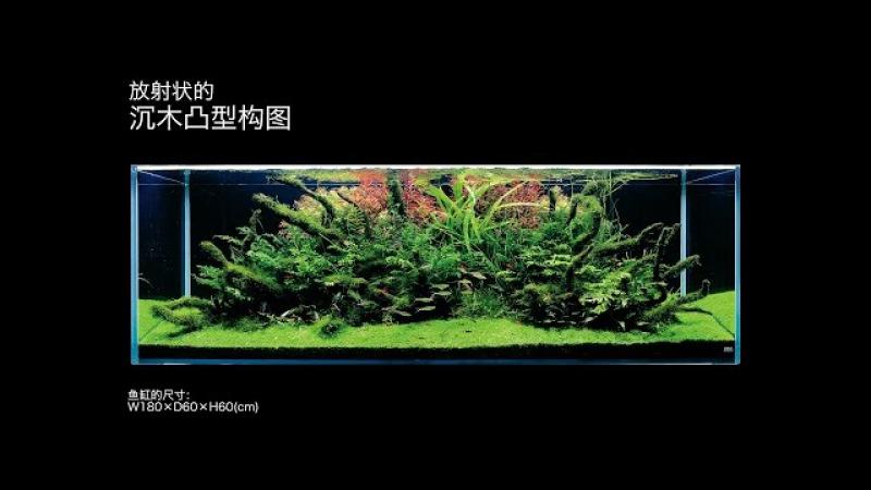 [ADAview] 180cm造景 沉木凸型构图篇