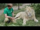 Разговор по душам белый лев Рокки и Олег Зубков
