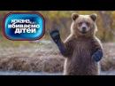 Медведь обосрался, самый СМЕШНОЙ выпуск ► Дорогая мы убиваем детей ◓ Семья Данч...