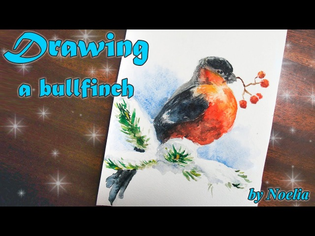 Drawing a bird bullfinch / Рисуем снегиря