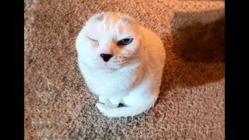 """""""Он похож на тюленёнка…"""" Девушка решила взять из приюта лечебного кота – и не ..."""