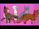 Havana - Leafpool, Squirrelflight, Bluefur, and Ivypool - Warrior Cats Animash