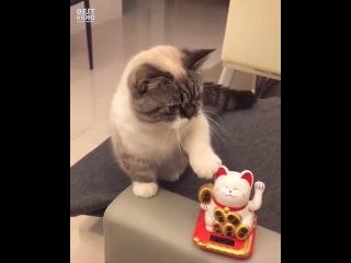 Котик пародирует талисман
