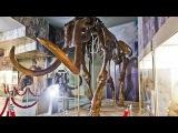 МАМОНТЫ в Азовском музее-заповеднике. MAMMOTH in the Azov Museum-Reserve, 2018.