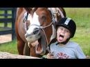 Самые смешные ПРИКОЛЫ С ЛОШАДЬМИ, Смешные лошади Funny horse 2