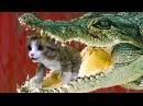 СИМУЛЯТОР Маленького КОТЕНКА 9 Беременная кошка родила кошечку - развлекательное видео пурумчата