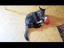 кошка катя играет с мачиком