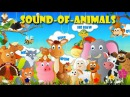 Animal Sounds Songs for Children, Funny Baby Play With Zoo Animals On The Playground Nursery Rhymes