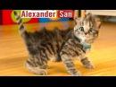 ПРИКЛЮЧЕНИЕ МАЛЕНЬКОГО КОТЕНКА мультик смешное видео для детей про котиков мул ...