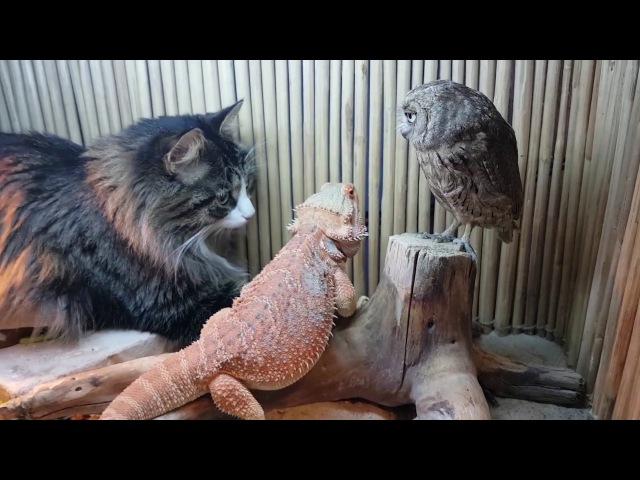 Сова, ящерица и кот соображают на троих чудо-порошок, закусывая тараканами.