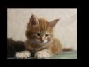 Мой фильм Рыжий котик Ураган. OURAGAN 1-й.