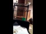 мой попугай ебашит под трап