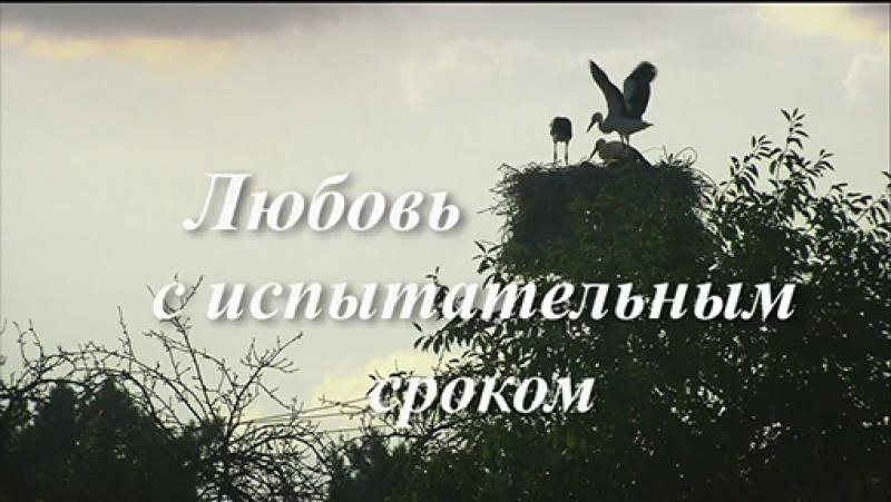 Любовь с испытательным сроком (2013)