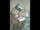 Мама кормит щенят