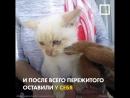 семья спасла замёрзшего на улице котёнка