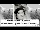 Приворот. Лучшее средство- украинский борщ.
