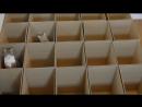 котики и коробки