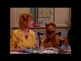 Alf Quote Season 1 Episode 20 Альф сказал