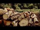 Ці удасца абараніць лесапарк, за які змагаліся голыя дзяўчаты Вырубка лесопарка в Могилеве Белсат